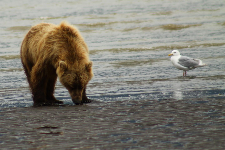 Bear View Adventure Alaska